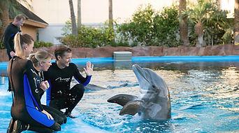 mirage-secret-garden-dolphin-habitat-tra