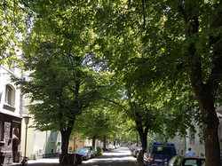 Blarerstraße
