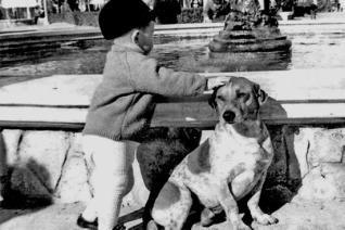 Tarzán, de hond die Aspe nooit verliet.