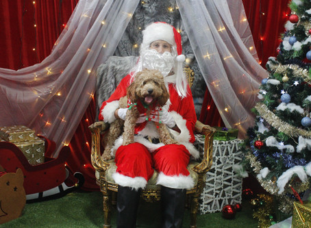 SantaPaws - Retail Fundraising Activation
