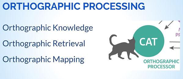 Orth Processing.JPG