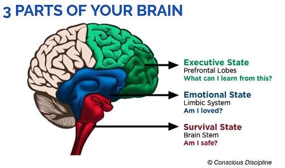 brainstate.JPG