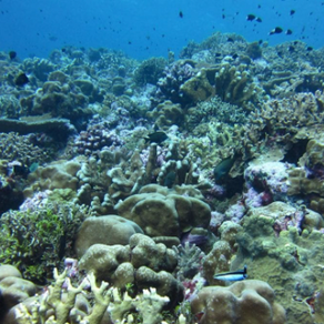 What The Acidification of Our Oceans Means For Our Future