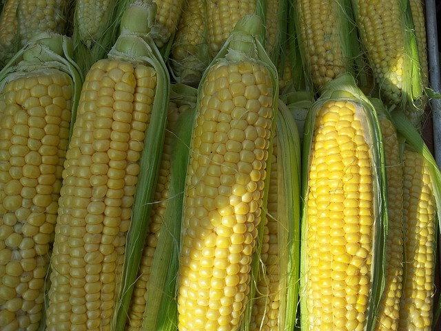 yellow corn.jpg