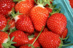 Fresh strawberries.jpg