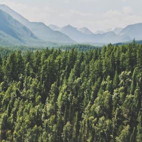 אתה לא יודע מהו יער
