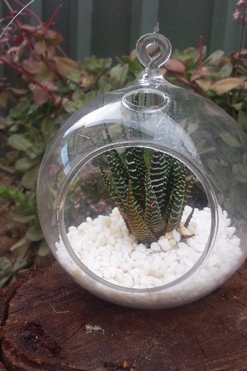 Succulent Glass Globe