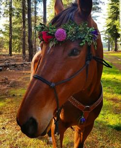 Horse Flower Crowns