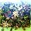 Thumbnail: Succulent Frames (Large)
