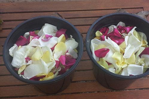 Rose Petals (per bucket)