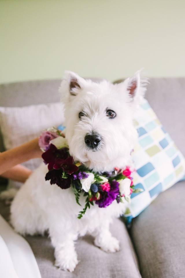 Flowers Of Envy Dog Flower Crown