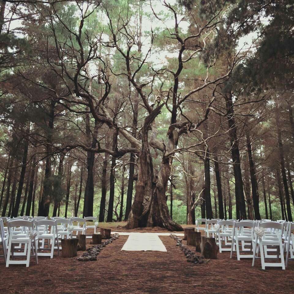 Kuitpo Tree Weddings Adelaide