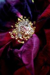 Portfolio Roses Michèle Théron Divine Nature Photographie