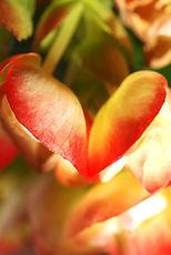 Porfolio Coeurs Michèle Théron Divine Nature Photographie