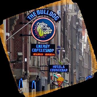 Amsterdam bulldog erasmus paris trip gro