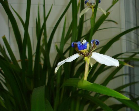 Houseplant photo.jpg