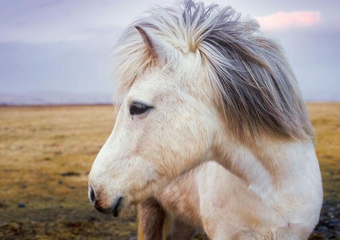 pony-2235916.jpg