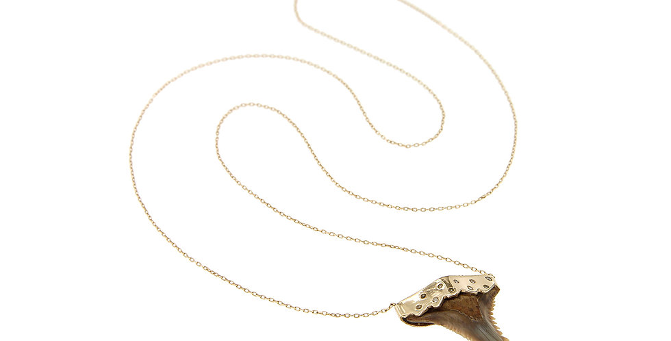 Shark Tooth Big With Diamonds
