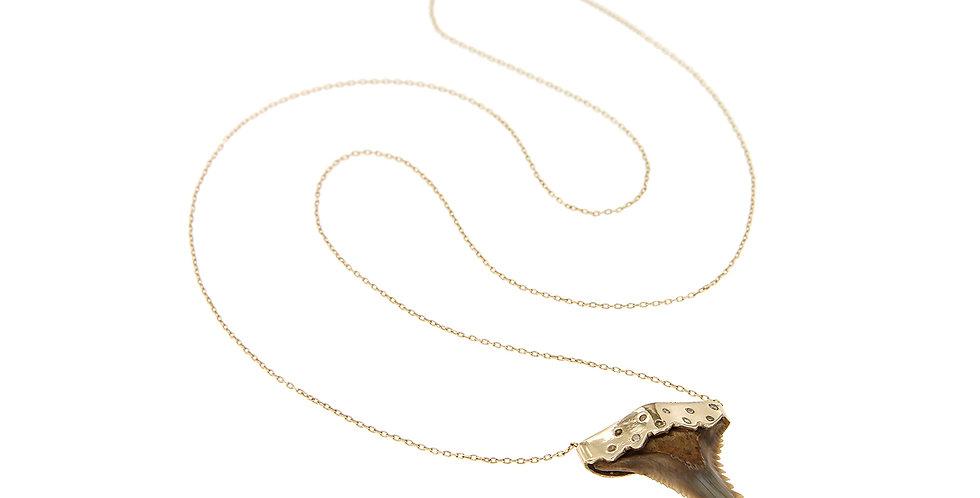 Shark Tooth Big With Diamonds