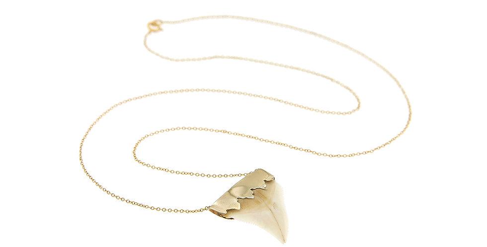 Shark Tooth Big - White