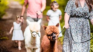 Gezinsreportage met alpaca's