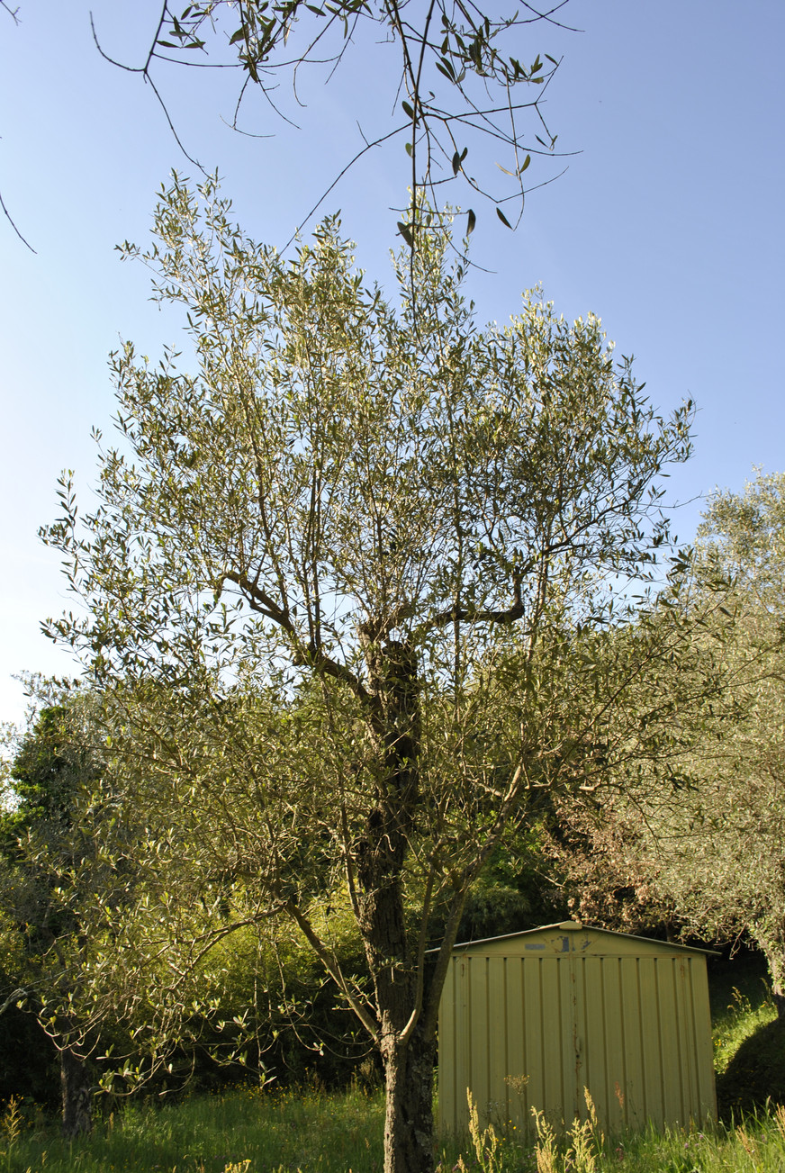 TREE SURGERY 27.JPG