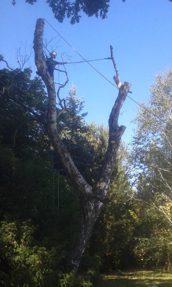 TREE SURGERY 7.jpg