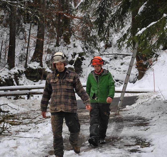 TREE SURGERY 5.jpg
