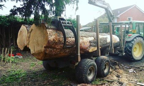 TREE SURGERY 50.jpg