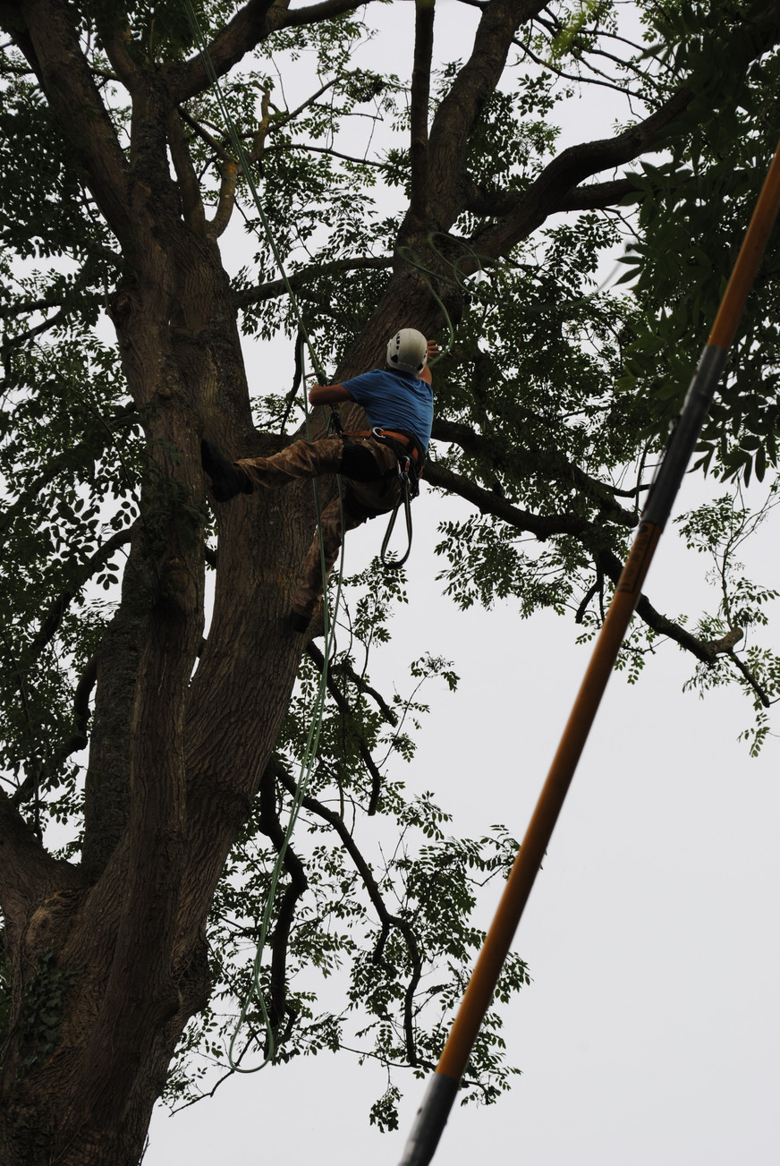 TREE SURGERY 3.JPG