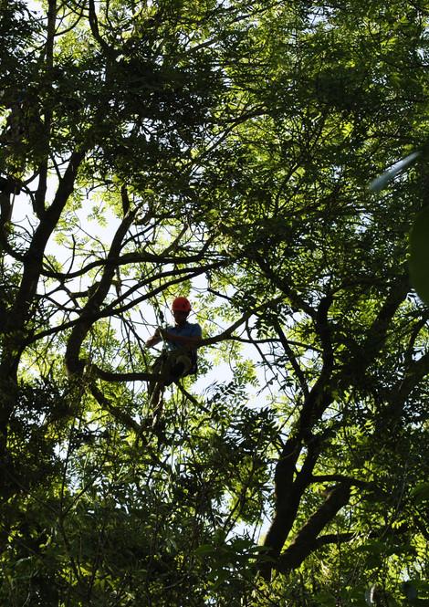 TREE SURGERY 32.JPG
