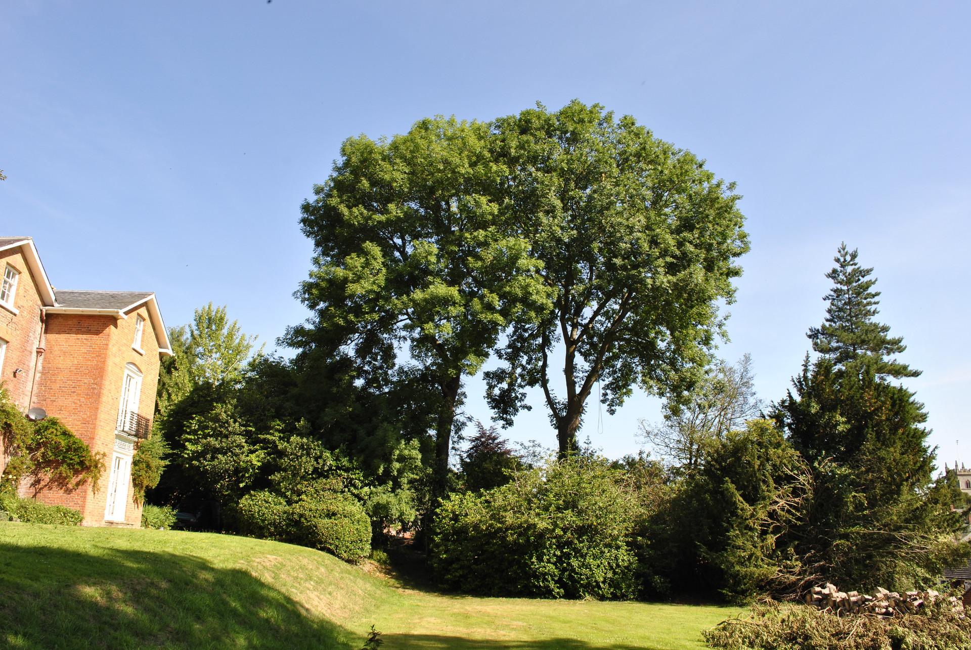 TREE SURGERY 24.JPG