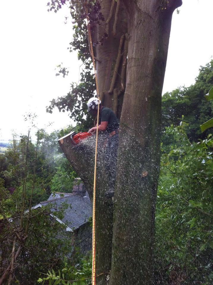 TREE SURGERY 10.jpg