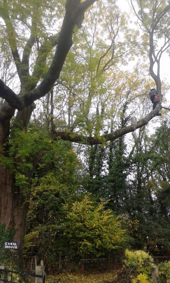 TREE SURGERY 8.jpg
