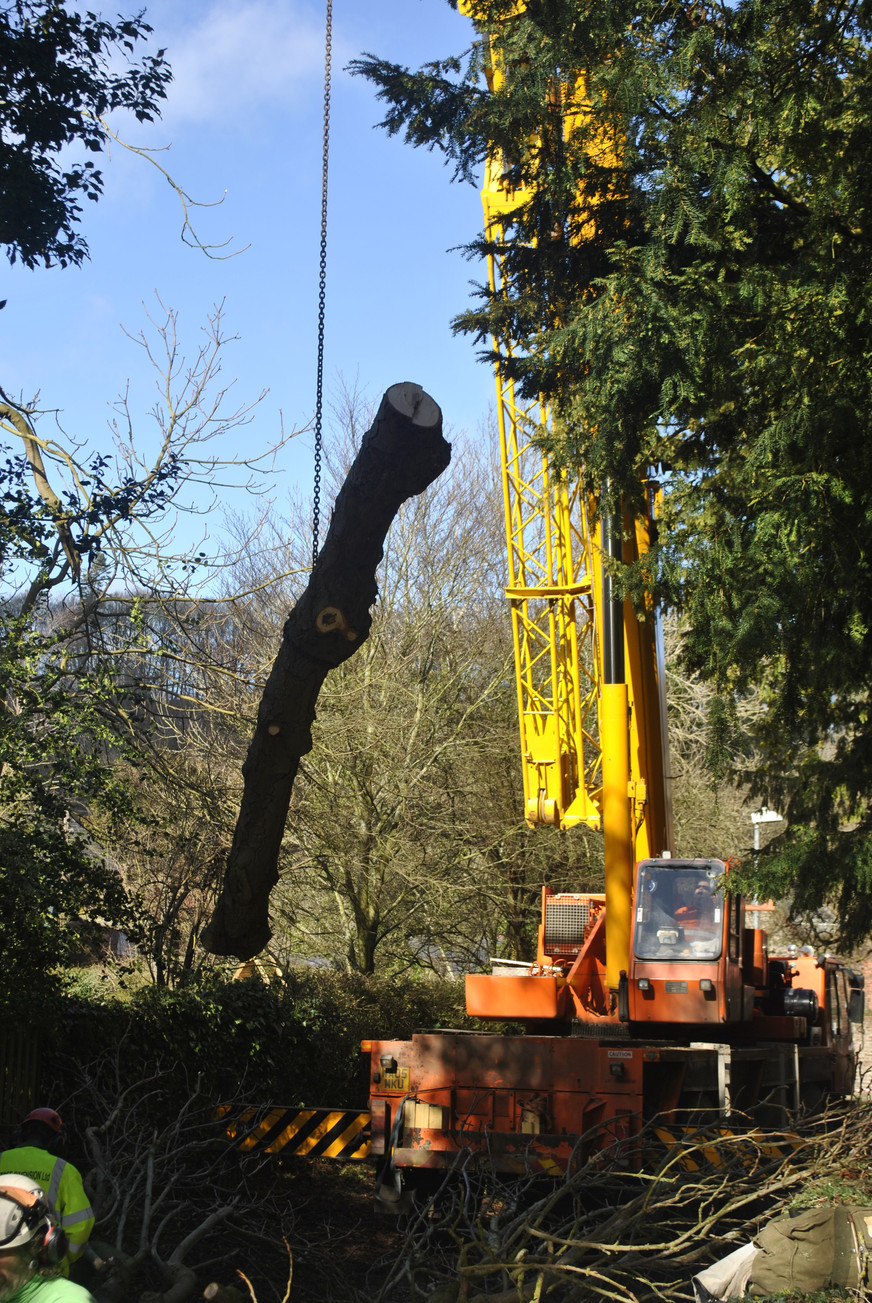 TREE SURGERY CRANE 2.JPG