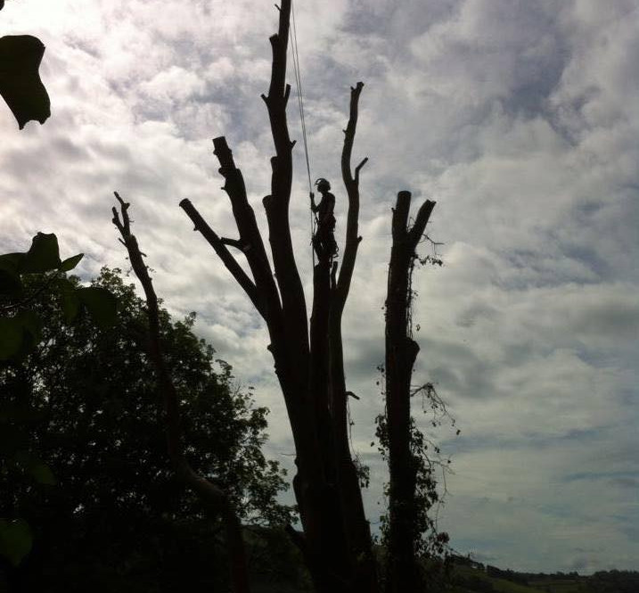 TREE SURGERY 13.jpg
