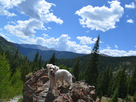 Get Your Canine Companion Off theTrail Quickly