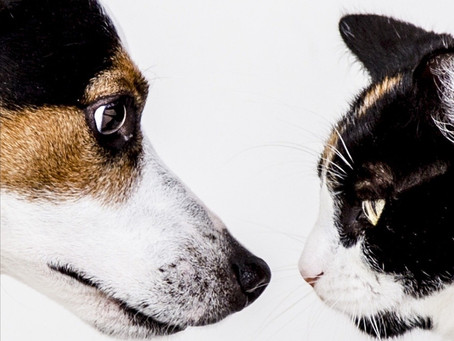 Dog and Cats Living Together....