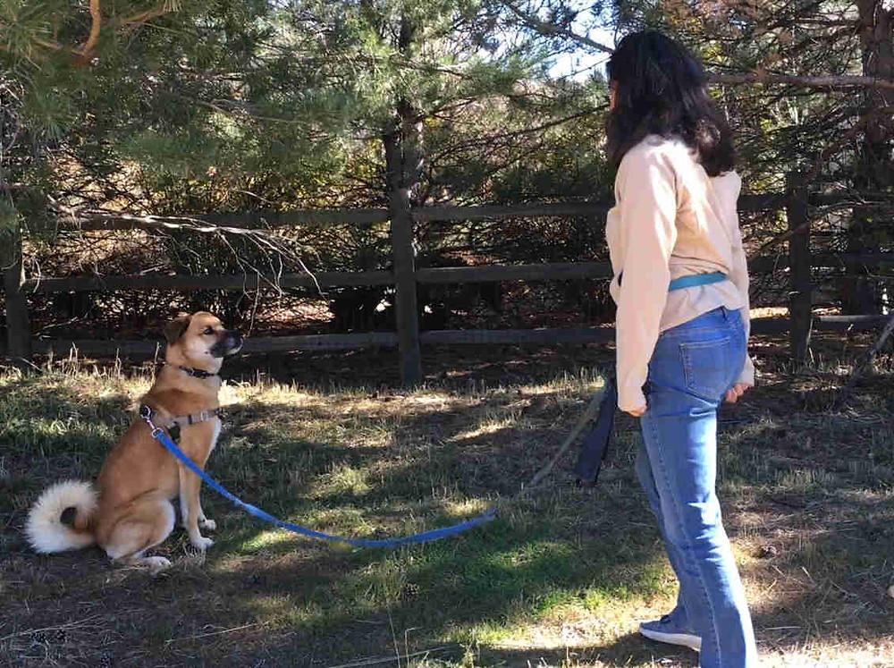 dog training leash walking