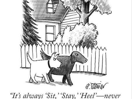 Enhance Your Canine Companion