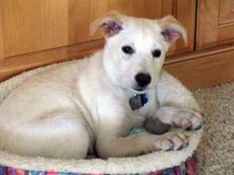 Mahoney-mixed-breed-dog-training-graduat