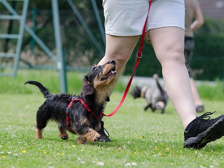 """I Need My Dog to Listen!"""