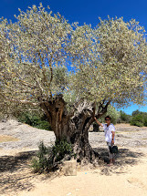 The 1,100 year old olive tree and me.jpg