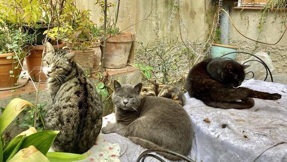 Cats Cotignac