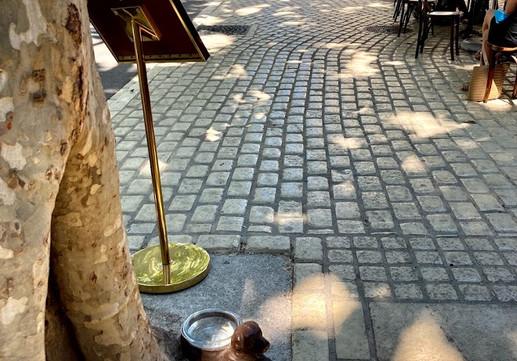 Rue Gambetta Uzès.jpg