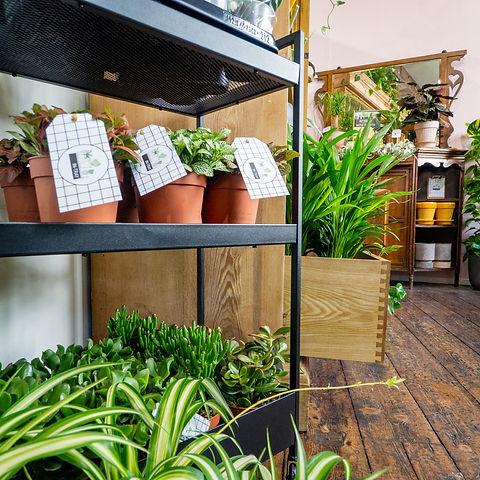Plants trolley.jpg