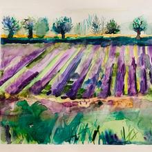 lavenda fields.jpeg