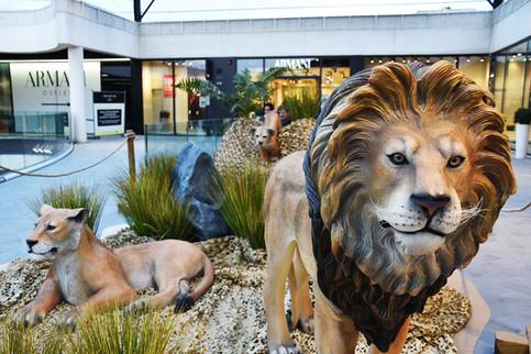Famille Lion