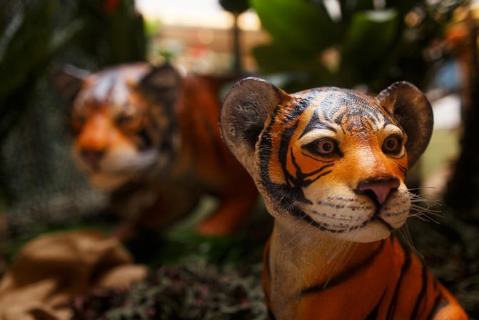Tigreau et Tigre