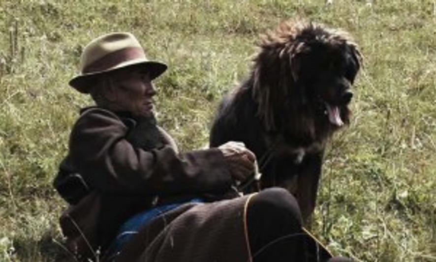 old-dog